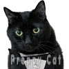 n-cat-crew-574454.jpg