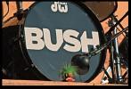 bush-350200.jpg